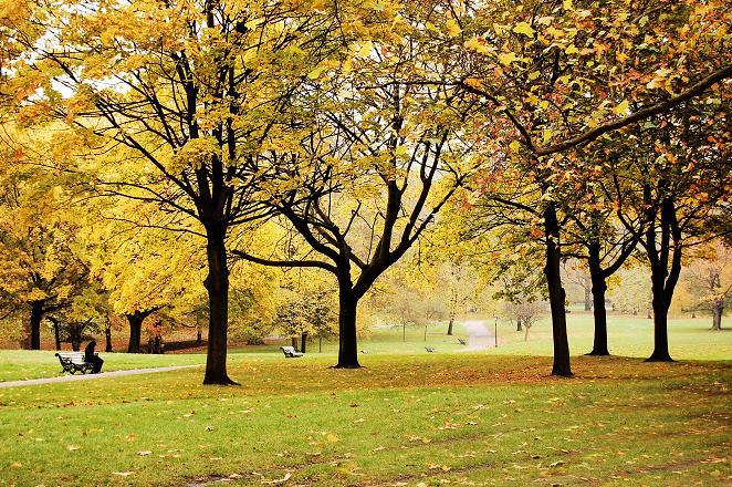 drzewa_parkowe